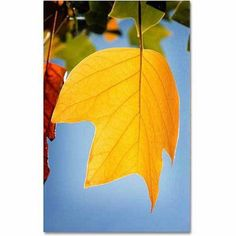 Trademark Fine Art Yellow Autumn Canvas Art by Philippe Sainte-Laudy, Size: 16 x 24, Multicolor