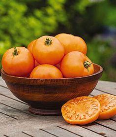 Orange Wellington Tomato Seeds and Plants, Vegetable Gardening at Burpee.com