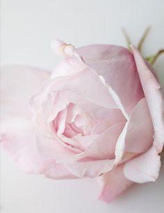 pretty in blushy pink
