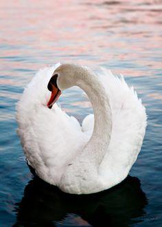 """""""Circle of Elegance"""" by John O'Leary. Belleza y elegancia de blanco en el agua."""