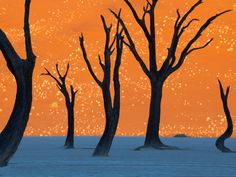 Photo: Camel thorn trees silhouetted against sand dunes