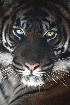 island of silence - big cats - Tiere Pretty Cats, Beautiful Cats, Animals Beautiful, Animals And Pets, Cute Animals, Gato Grande, Tier Fotos, Big Cats, Beautiful Creatures