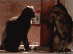 Cat-slaps-come-at-me-bro