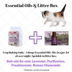 Essential Oils can be safe for cats. Improve the litter box and help your pet pick up essential oils that will benefit their health too. YLWebsite.com/ErinChamerlik