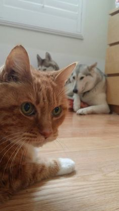 15 cats who know who's boss