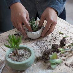Planters planting plants