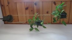 Old barn pulley used as a plant holder hanging from ceiling.