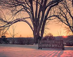 Snowy Tree and Bench At Sunrise - Wood Print Puzzle Of The Day, Snowy Trees, Winter Trees, Winter Snow, High Resolution Picture, One Light, Wood Print, Free Photos, Vows
