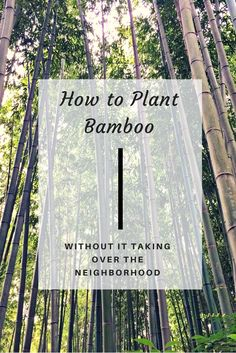 Bamboo has bad reputation for spreading far and wide, making it difficult to keep in check. With these handy tips, you can tame bamboo before it gets out of control, and create a serene backdrop for y Bamboo Hedge, Bamboo Planter, How To Plant Bamboo, Bamboo For Privacy, Potted Bamboo, Bamboo In Pots, Outdoor Projects, Garden Projects, Growing Bamboo