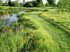 bolton-mark-large-wild-pond-mown-grass-path-through-ranunculus-buttercup-meadow.jpg
