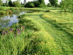 bolton-mark-large-wild-pond-mown-grass-path-through-ranunculus-buttercup-meadow.jpg