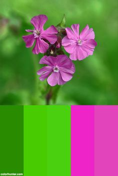 Pink And Green Color Scheme from colorhunter.com