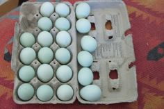 blue chicken eggs, gonna go get some to color match Blue Chicken Eggs, Egg Packaging, Blue Eggs, Chicken Houses, Color, Blues, Basket, Dreams, Animals