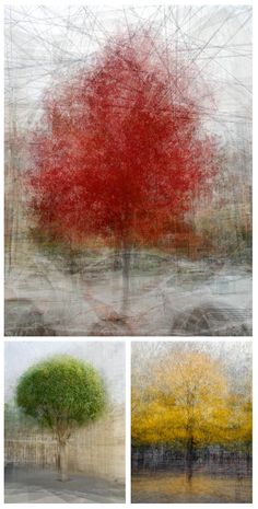 For his 'In the Round' series, Pep Ventosa walked in a circle around trees while furiously snapping photos. Afterwards, he stitched together the images to form a 360° view of the tree and its surroundings. (More at the link)