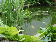 vijverbeplanting Garden Inspiration, Planting, Aquarium, Plant Leaves, Tropical, Goldfish Bowl, Plants, Aquarium Fish Tank, Aquarius