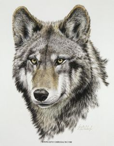 """Wolf Head, Timber"" 22 X 17 -WOLVES, FOXES AND OTHER DOGS"