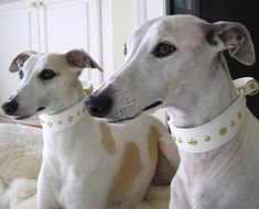 White Sighthound Style Leather Collar for Whippet, Italian Greyhound, Saluki, Greyhound decorated with Crowns, Fleur-de-Lis and Crystal Rhinestones from Austria Whippet Puppies, Whippets, Dogs And Puppies, Doggies, Greyhound Art, Italian Greyhound, Dog Collars & Leashes, Leather Dog Collars, Lurcher