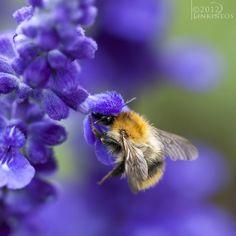 Bumblebee by Linkineos.deviantart.com
