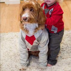 Casal veste o cão igual ao neto e conquista a internet | Galeria | Mundo | band.com.br - Band.com.br
