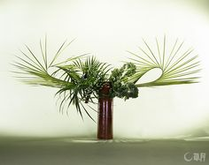 Expressions of Canary date palm and areca palm change dramatically when they are rolled up. Lines with impact are created by the natural shapes of palm leaves greatly-curved on both sides.##  Canary date palm, Areca palm, Kare##  Self-made ceramic vase##  96×172×91cm