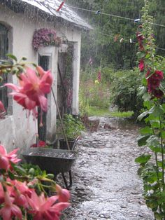 I love seeing the garden in the rain.  It's like showing the cord to the television set in a magazine.  By Marie Davidsen