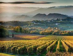 Waiting for EXPO 2015: discovering Prosecco
