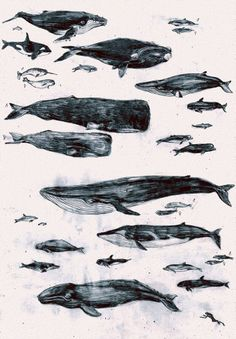 Whale Illustration Master Project by Penelope Deltour Creation Art, Whale Art, Sea Creatures, Art Photography, Illustration Art, Artsy, Prints, Artwork, Animals
