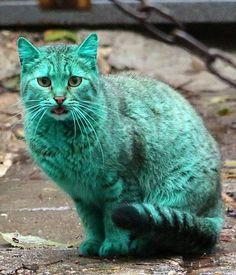 Green cat..!!