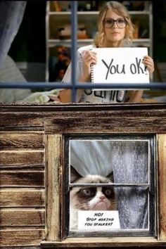 Grumpy Cat has a stalker. you feeling grumpy, grumpy cat? - Tap the link now to see all of our cool cat collections! Grumpy Cat Quotes, Grump Cat, Funny Grumpy Cat Memes, Funny Animal Jokes, Cat Jokes, Cute Funny Animals, Funny Animal Pictures, Funny Cats, Grumpy Kitty