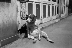 Richard Kalvar. FRANCE. Paris. 14th arrondissement. Rue de l'Ouest. Tired dog. 1974.