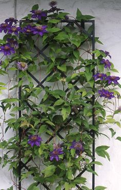 Steel Wall Trellis by Garden Artisans Metal Garden Trellis, Iron Trellis, Wall Trellis, Diy Trellis, Pergola Attached To House, Pergola With Roof, Clematis Trellis, Flower Bed Designs, Garden Catalogs