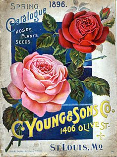 C. Young & Sons Co.