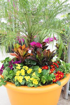 Huge planter with tropical plants