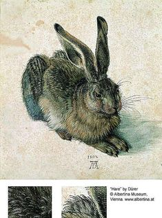 "53 Paintings by Famous Artists: ""Hare"" by Albrecht Dürer"