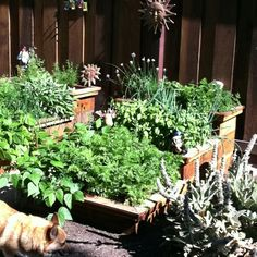 Here are those veggie boxes 2 months later! Wow!