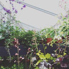Fantastiske Grennessmindes økologiske gartneri @gminde #grennessmindesøkologiskegartneri #urbangardencompany