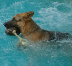 Floating all natural coconut and rope dog toy. by Cocomutz on Etsy, $14.99