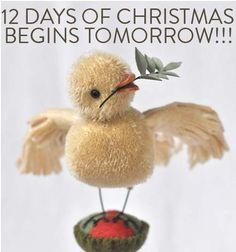 sweet Christmas chick
