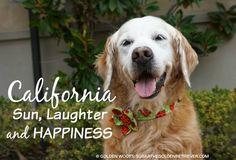 California TOP 25 MOST DOG HAPPY U.S. STATES