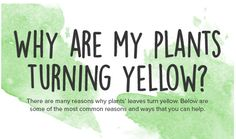 What to do about yellow leaves, pests and other garden problems. Natural solutions - Follow the infographic chart to find the problem and solution.