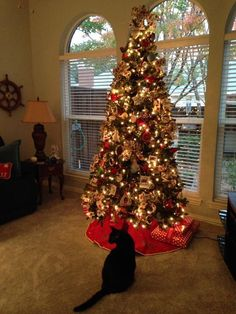tall and full christmas trees are ideal for homes with high ceilings complement it with