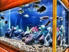 My new aquarium with some new rocks. :-)