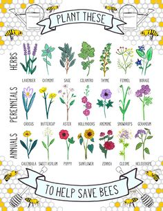 21 bee-friendly plan