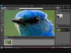|Painting Effect (Smudge Tool) - Animals| Photoshop Elements 9