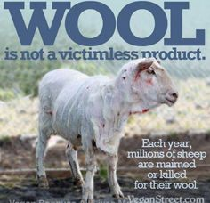 Go vegan, don't buy animal products. Give up meat and dairy. WOOL is NOT a victimless product. Each year, MILLIONS of sheep are maimed or killed for their wool. Cane Corso, Sphynx, Chinchilla, Rottweiler, Pitbull, Reasons To Be Vegan, Vegan Quotes, Factory Farming, Why Vegan