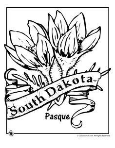 State Flower Coloring Pages Georgia State Flower Coloring Page