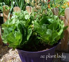 Planting Vegetables in Containers - with Flowers from AZ Plant Lady