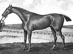 Waxy (1790–1818) British Thoroughbred racehorse that won the 1793 Epsom Derby & was an influential sire in the late 18th & early 19th century. Waxy was bred by Sir Ferdinando Poole & was foaled at Lewes in 1790. Sired by Pot-8-Os, a son of the foundation stallion Eclipse, whose genetic lineage traced to the Darley Arabian. Waxy's dam, Maria, was sired by the influential stallion Herod & produced one full-brother to Waxy. Waxy won 9 races out of 15 starts during his 4 year racing career