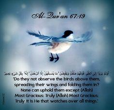 'أَوَلَمْ يَرَوْا۟ إِلَى ٱلطَّيْرِ فَوْقَهُمْ صَٰٓفَّٰتٍۢ وَيَقْبِضْنَ ۚ مَا يُمْسِكُهُنَّ إِلَّا ٱلرَّحْمَٰنُ ۚ إِنَّهُۥ بِكُلِّ شَىْءٍۭ بَصِيرٌ' Al-Qur'an 67:19 'Do they not observe the birds above them, spreading their wings and folding them in? None can uphold them except (Allah) Most Gracious: Truly (Allah) Most Gracious: Truly it is He that watches over all things.'