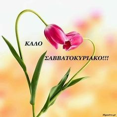 Greek Quotes, Good Morning, Plants, Pictures, Wallpapers, Flowers, Buen Dia, Photos, Bonjour